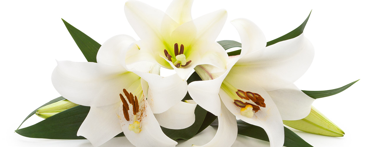 Lilies symbolize innocence restored to the soul of the deceased